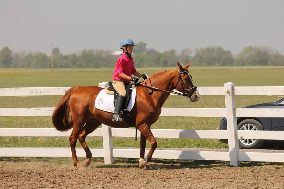 Horse Boarding Facility   Mascoutah, IL   CW Equestrian